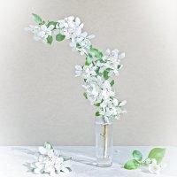 цветение... :: зоя полянская
