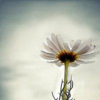 Цветок надежды :: Veronika Zyryanova