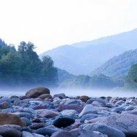Туманное утро в лесу :: Майк Дашко