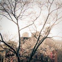 сияние весны :: Инна Аипова
