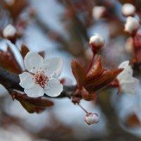 весна :: виталий Цицюрский