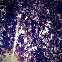 Узорные яблоневые ветви :: Елена Волжанкина