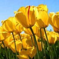 цветы :: арина чуракова