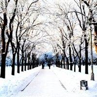 Зимняя аллея :: Оля Адова