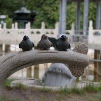Птички :: Евгений Денисов
