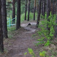 В лесу :: Олеся Нестеренко