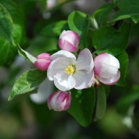 первые цветы :: виталий Цицюрский