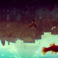 наших рыбок город :: Анастасия Копко