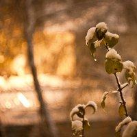 Первый снег тает :: Павел Меньшиков