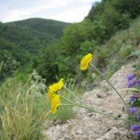 Жёлтые одуванчики :: Екатерина Р