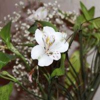 цветы!!! :: сергей михайлов