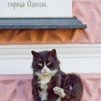 городской кот. :: Николай Сидаш