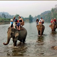 Прогулка на слонах :: Евгений Печенин