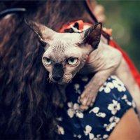 Крутой котяра! :: Михаил Баженов