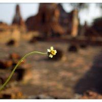 Одиночество :: Евгений Коркин