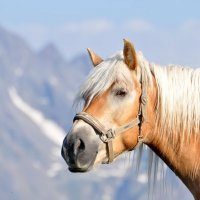 Конь в горах :: Ирина Пол