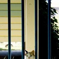Утренняя кошка :: Артём Павлов