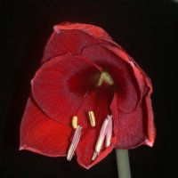 Цветок :: Алла )