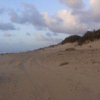 Долгая дорога в дюнах... :: susanna vasershtein