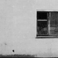 Пустое окно :: Екатерина Костюкевич