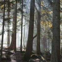 Утро в лесу :: Владимир Богославцев(ua6hvk)