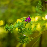 цветок :: Кристина Солдатенкова