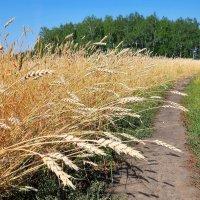 Урожай :: Владимир Зыбин