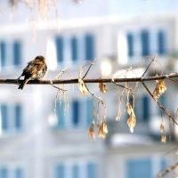 Весна идет? :: Марина Матвеева