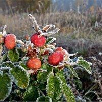 Морозным утром :: Николай Белавин