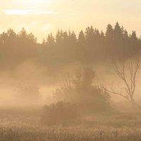 утренний туман :: Александр Сивкин