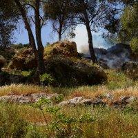 лес горит :: evgeni vaizer
