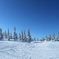 Зимняя красота :: Sasha Kulikov