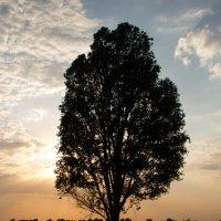 Дерево :: Михаил Максимович Губко
