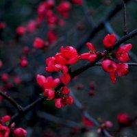 весна в крыму.. :: Марина Брюховецкая