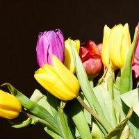 мои тюльпаны :: Юлия Паршакова