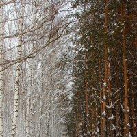 Зимний сад :: Екатерина Маринина