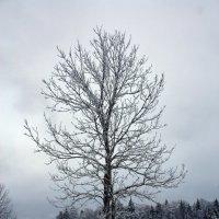 Зима в Подмосковье :: Alexey Malishev
