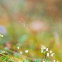 Весна в горах :: Анастасия Ласская