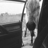 - шеф , до конюшни ! :: Николай Бабий