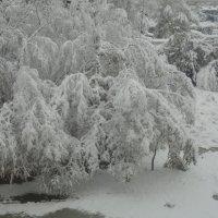 весна!скоро лето?! :: juryy kondratev