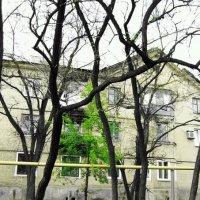 Весна :: Вера Бабкова
