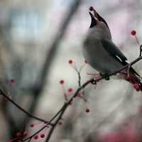 птички :: Марина Попова