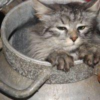 Кот в бочке :: Екатерина ))