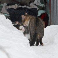 УРА ! (ария мартовского кота исполнена. Сам слышал) ВСЁ. ВЕСНА!!! :: Юрий Вовк