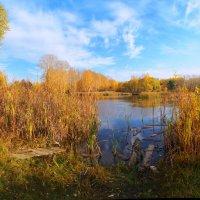 осень  2012 :: михаил пасеков