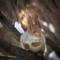 solar squirrel :: Владислав Чернов