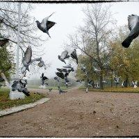 Голуби :: Ольга Ваайнэ