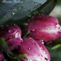 цветок :: Марина Фролова