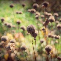 Осень :: Виктория Слуц