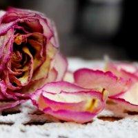 Роза.. :: Катрин Моргачева
